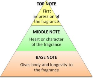 Note pyramid fagrance dictionary